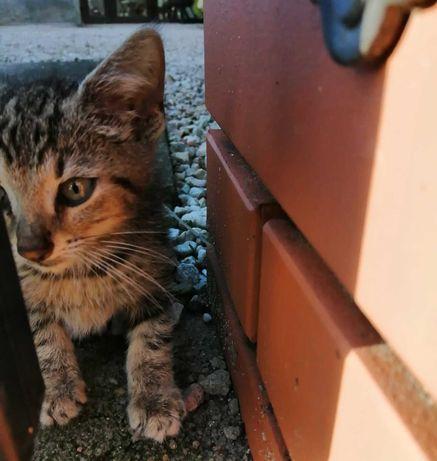 Poznań i okolice - szukamy domu tymczasowego dla kotki z dwójką kociąt