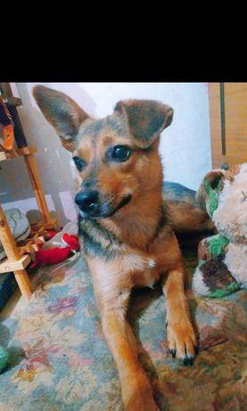 Собачка Эля, годик, стерилизованная