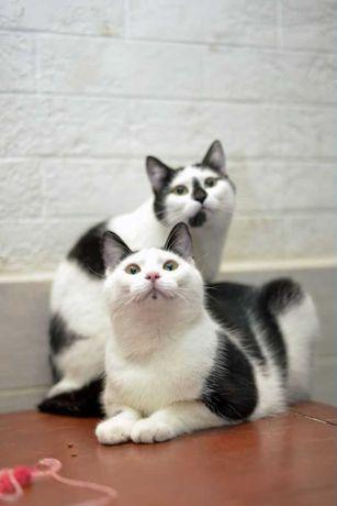 Отдам кота, кошку, стерилизованы, привиты.