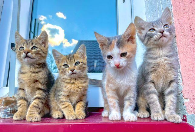 Віддаю кошенят (2 хлопчика,2 дівчинки)