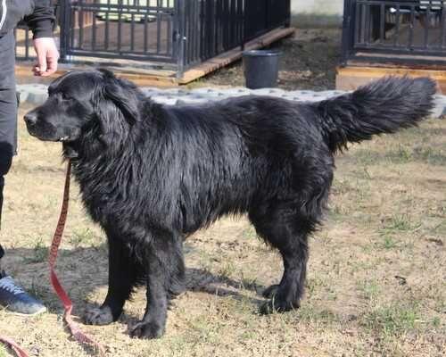Znaleziono psa w Ruszelczycach
