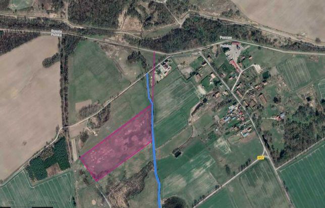 Ziemia rolna 5,2 ha Szczurkowo 250 metrów od granicy z Rosją