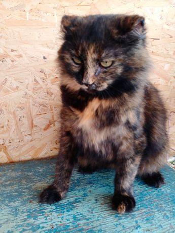 Ряба. Кошечка с короткими ушками