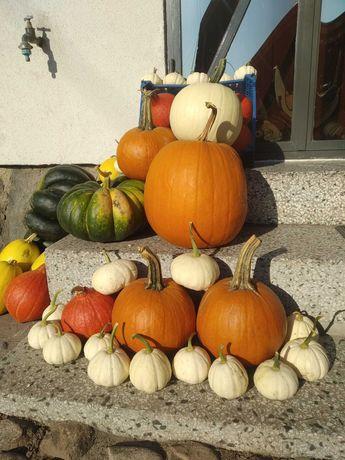 Dynia baby boo casperita małe białe hokkaido makaronowe Halloween
