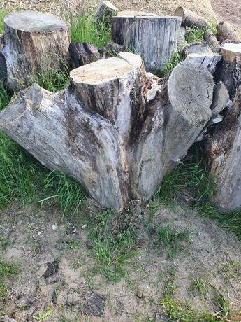 Drzewo wierzba