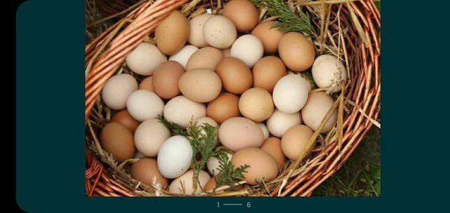 Swojskie jajka od kur z wolnego