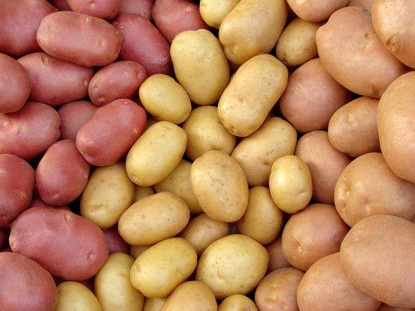 Картопля насіннєва Голландія опт/роздріб