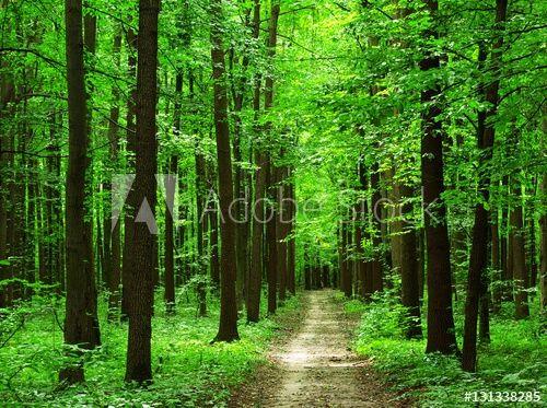 Sprzedam las w chorzewie Ławiana - image 1