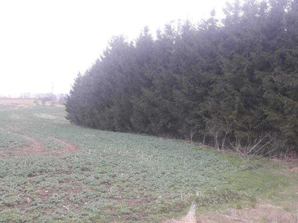 Działka rolna kolonia Zdunki koło Ełku