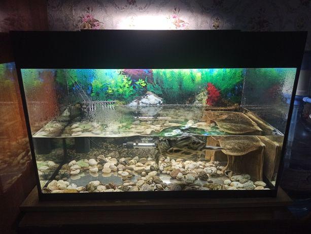 Срочно аквариум 120 л вместе с красноухой черепахой,всем оборудованием