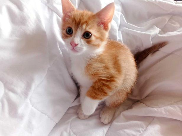 Малятко-кошенятко, котёнок-мальчик