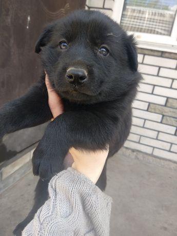 Отдам в хорошие руки щенков