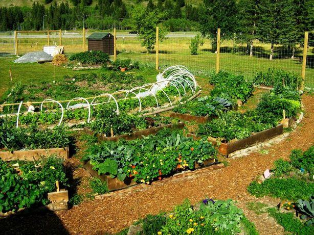 Nawóz naturalny obornik bydlęcy pod warzywa permakultura zrębki