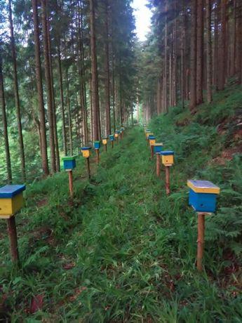 Матки Карпатка 2021р бджоломатка пчеломатка, бджолопакети пчелопакети