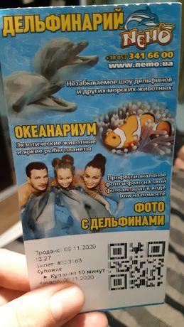 Билет на купание с дельфинами