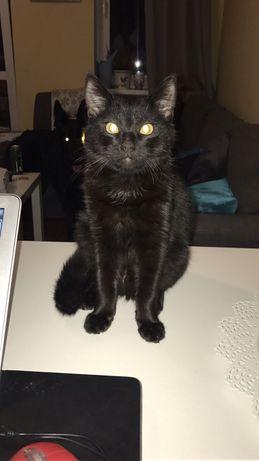 Poszukiwany kot, nagroda 2500zl