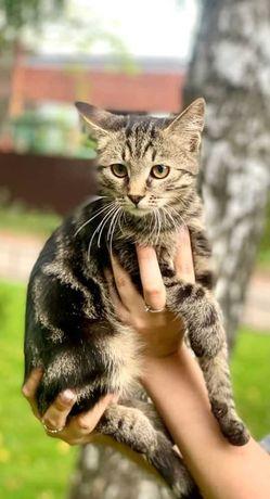 віддам котеня, хлопчик, 3 місяці