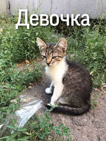Отдам котёнка лесного окраса ,девочка ,2 месяца