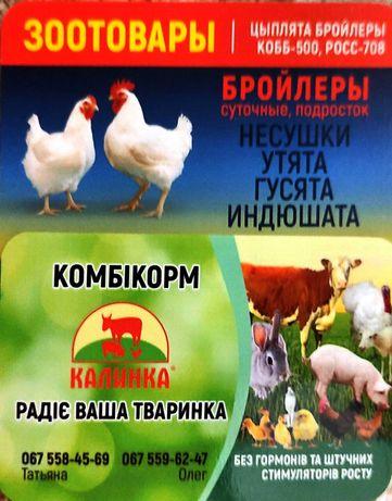 Цыплята бройлеры КОББ 500,РОСС 708,несушки, утята,гусята,индюшата.