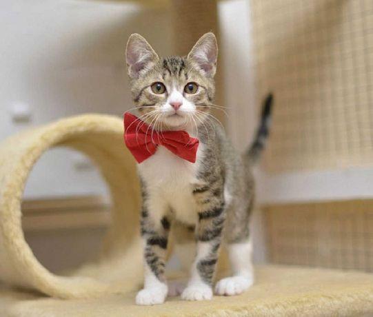 отдам котенка, мальчик, 3 месяца.