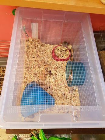 SAMLA, klatka dla myszy, chomika, gryzoni
