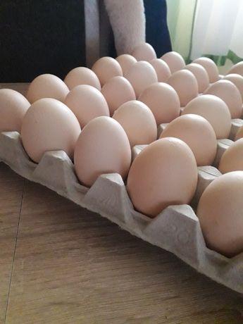 Swojskie jajka 12zł za 15sztuk