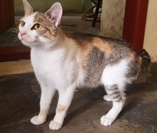 Wrocław i okolice - piękna, zdrowa, młoda kotka Plamka szuka domu