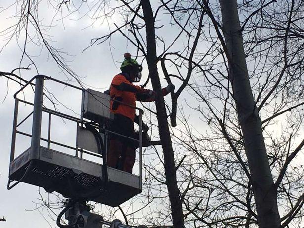 Wycinka drzew trudnych alpinistycznie podnośnik koszowy Warszawa