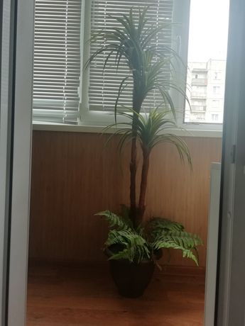 Пальма декоративная