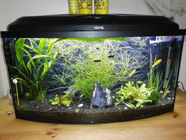 Akwarium panoramiczne 112l z wyposazeniem