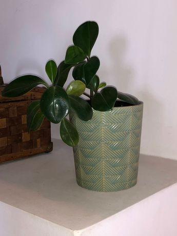 Planta com vaso de cerâmica