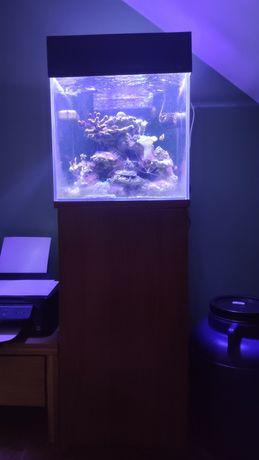 Akwarium morskie 64l 40x40x40 sump, z sprzętem i życiem (do restartu)