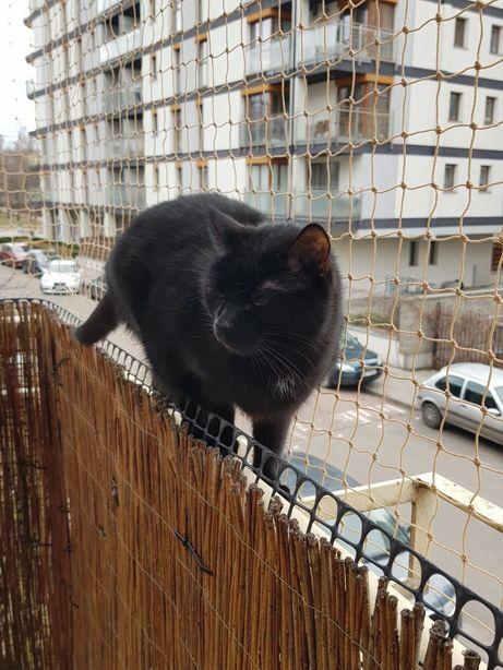 Siatka dla kota, lub na gołębie. Montaż