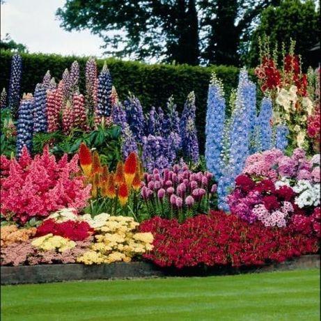 Рассада Цветов многолетних садовых . Саженцы . Цветы . Низкие цены.