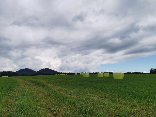 Sianokiszonka z sianych mieszanek traw z koniczyną /lucerną 125cm