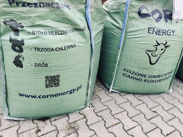 Kiszone gniecione ziarno kukurydzy BB 600 kg Corn Energy