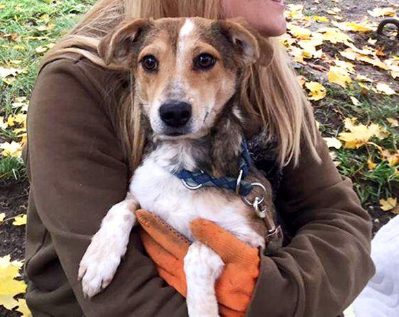 Рокси - малышка собачка 6 кг - очень ждет Хозяев!