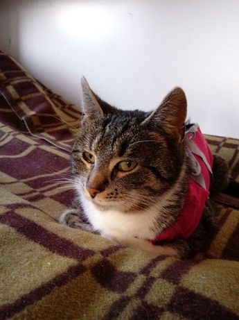 Tola - wesoła, przyjazna i młoda koteczka, do adopcji.