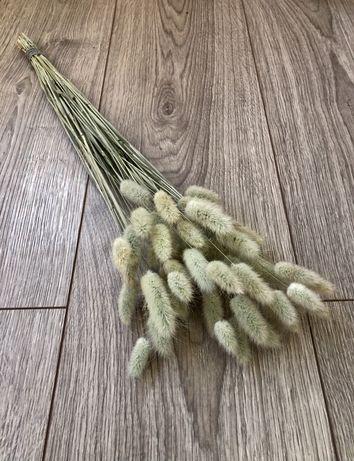 Лагурус, заячий хвостик натуральный сухоцвет