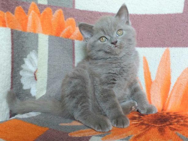 Лиловый плюшевый котенок
