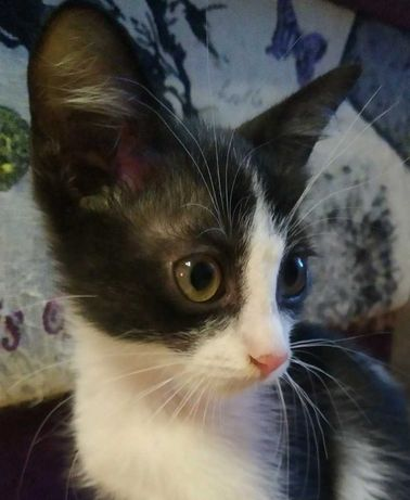 Замечательный котенок. 3 месяца