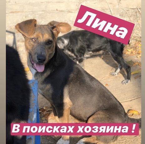 Собака Лина ищет дом