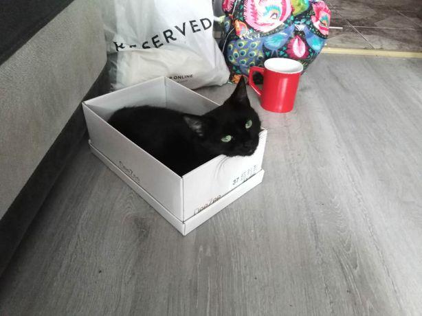 Zginęła czarna kotka