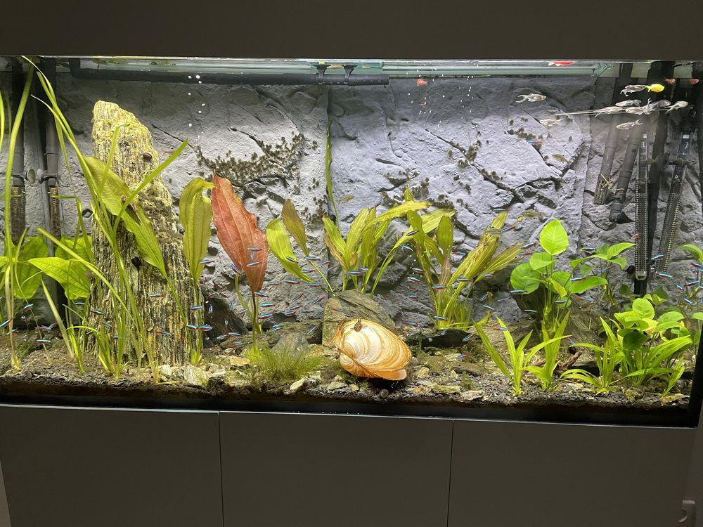 Akwarium 300l z wyposażeniem