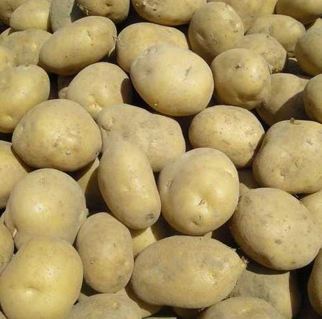 Ziemniaki jadalne prosto od rolnika na oborniku bez nawozów 2021