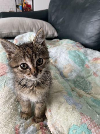 Маленькая кошечка ищет семью