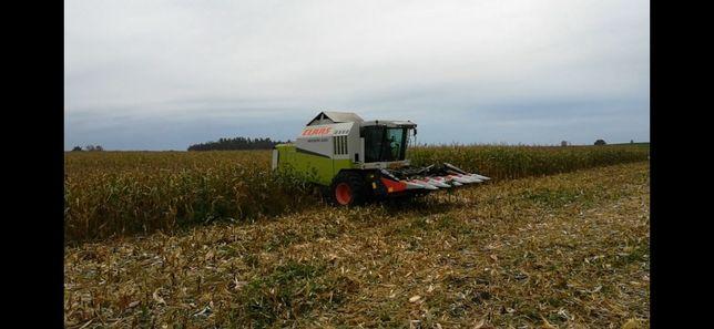 Skup ziarna kukurydzy mokrej i suchej koszenie wóz przeladowczy