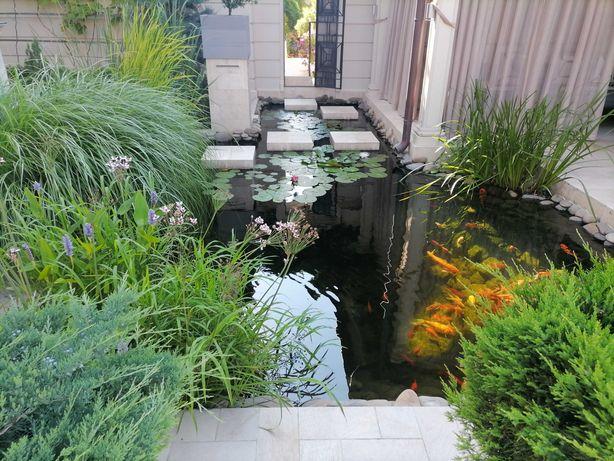 Устройство садовых водоемов и плавательных прудов