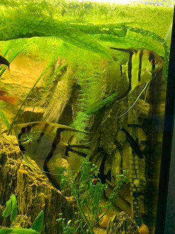 Ryby do akwarium i krewetki
