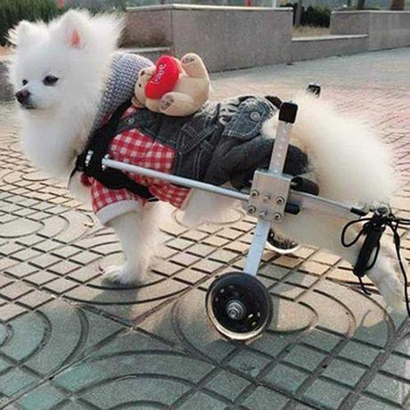 WÓZEK inwalidzki rehabilitacja dla PSA kota XL-3